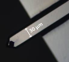 Optical microscopy image of a rectangular cantilever