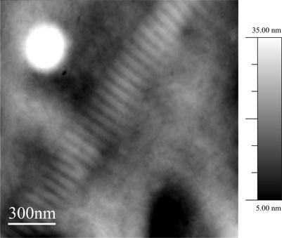 a topographic AFM image of a collagen fibril
