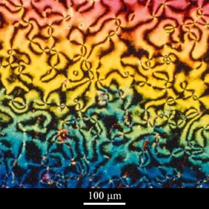 Micrograph of nematic liquid crystalline polymer