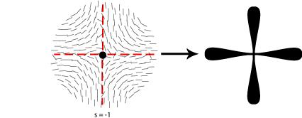 Diagram of disinclination in nematic liquid crystal s = -1
